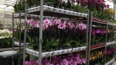 Tralle med orkideer ASE 2015